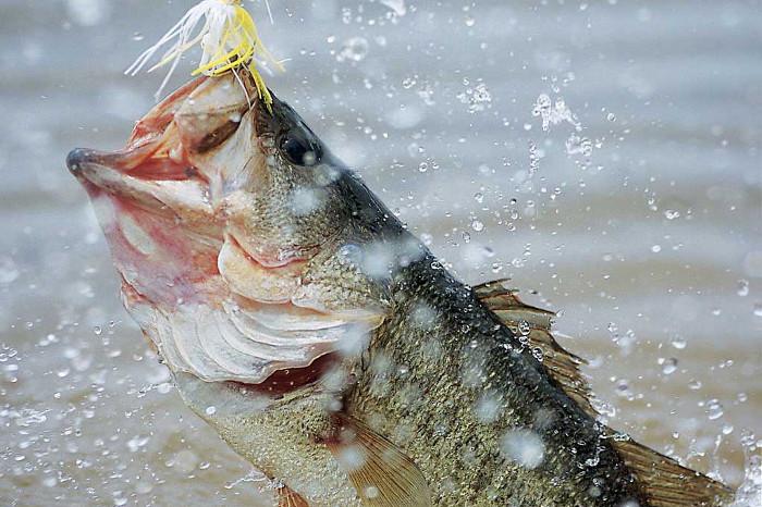 sportfiske i harasömåla